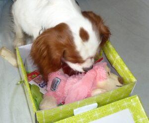 Kong Dog Toys