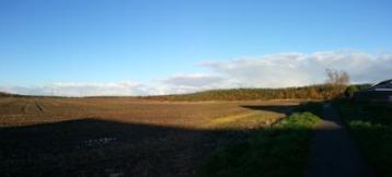 Panorama of field