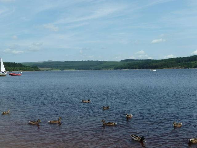 Ducks at kielder water