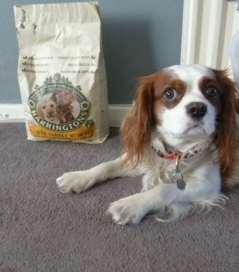 Harringtons Dog Food Owned By Who