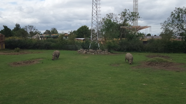 Rhinos at Flamingo Land