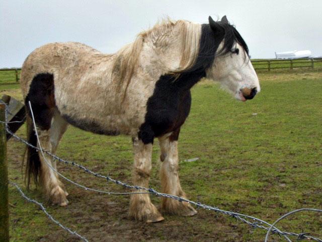Pony at Whitby