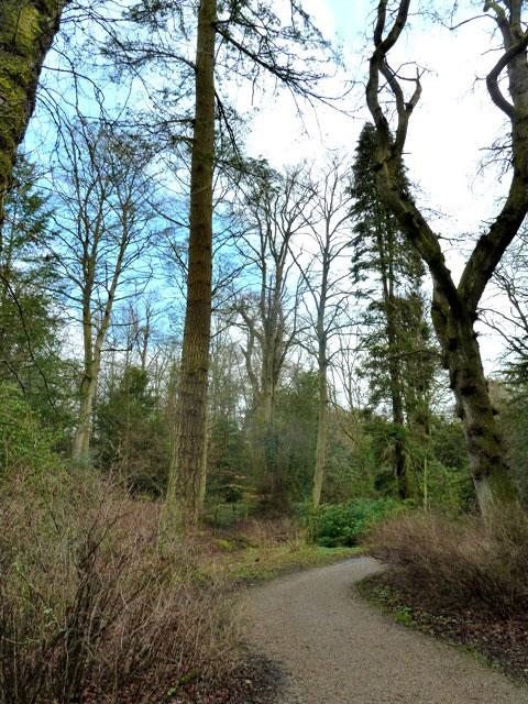 East woods