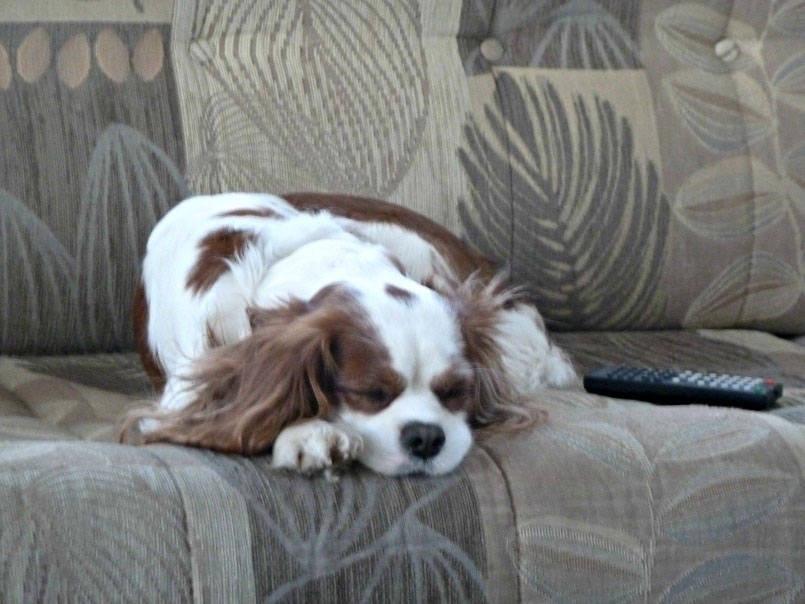 Eddie the dog
