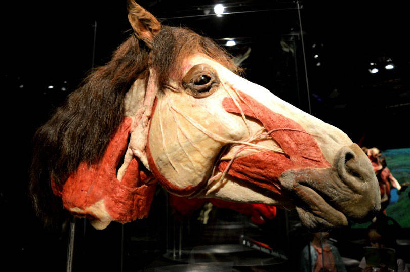 Horse at animals inside out exhibition