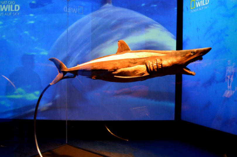 shark at body worlds animals inside out