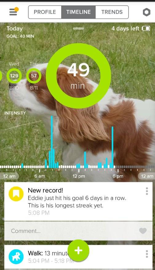 whisltle activity monitor sceen