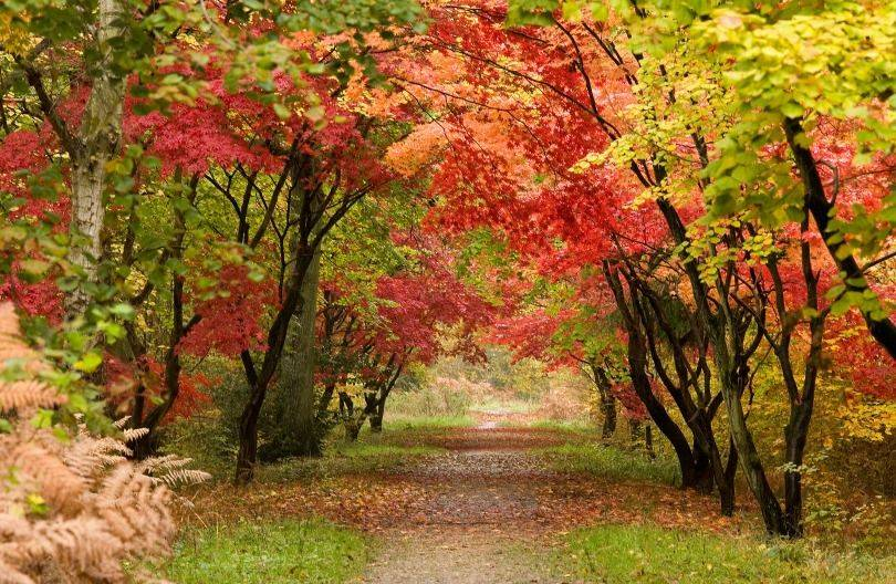 Autumn colours in the forest