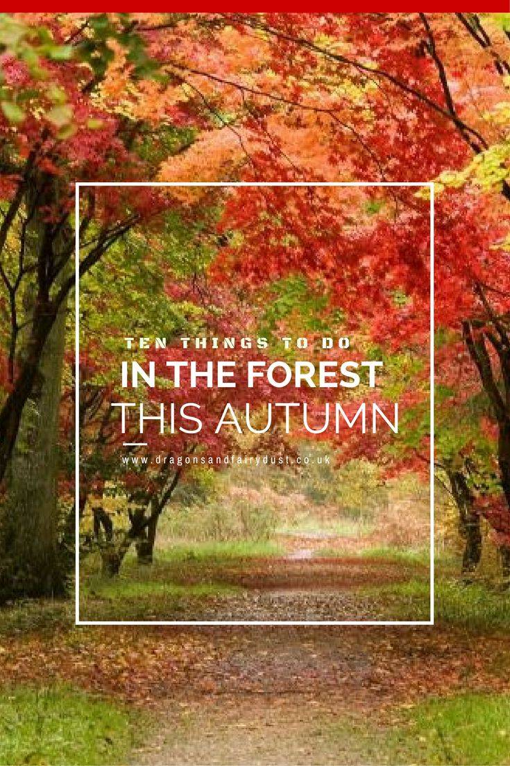 Things to do in the forest this Autumn