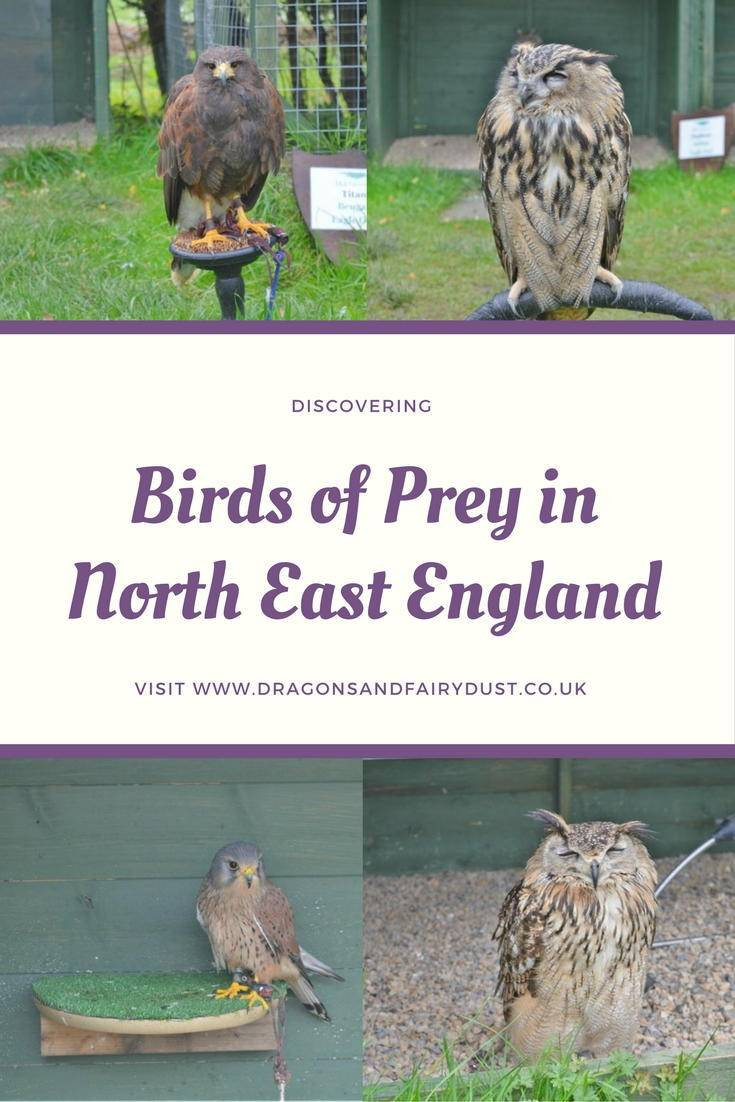 Discovering birds of prey in North East England. Visitng a falconry centre