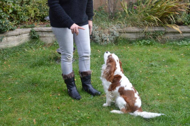 Autumn Walkies with Hotter Boots