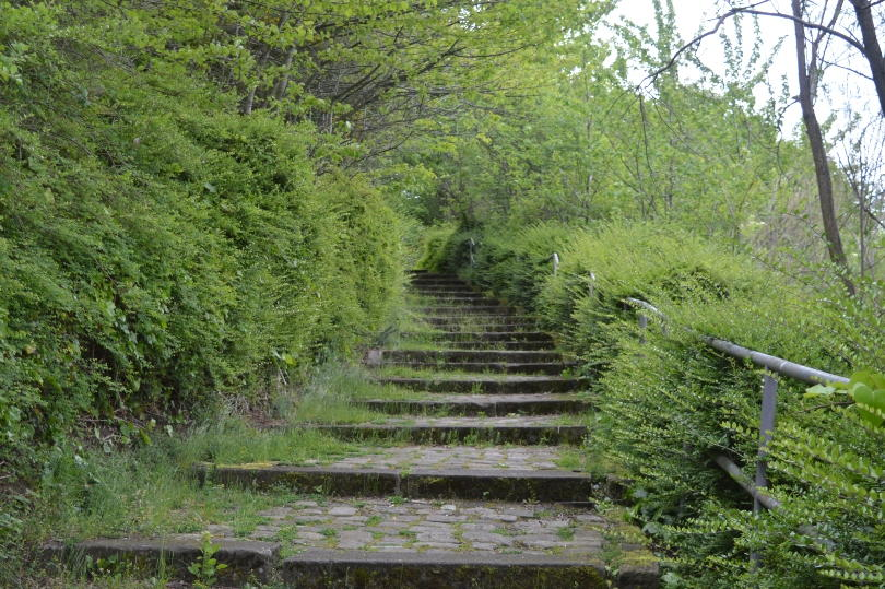 Stairs going down though woods