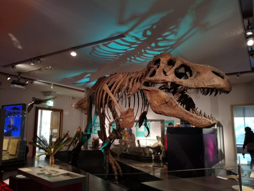 T-Rex at Great North Musueum