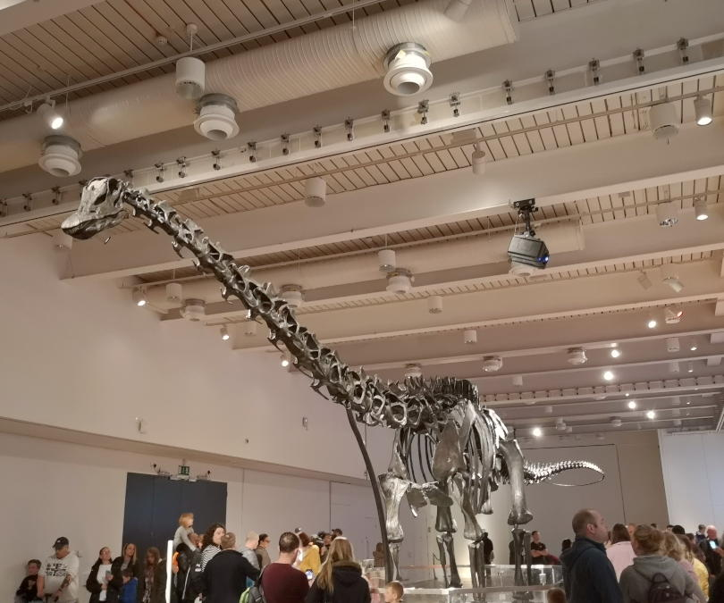 Dippy the diplodocus skeleton in the Great North Musueum