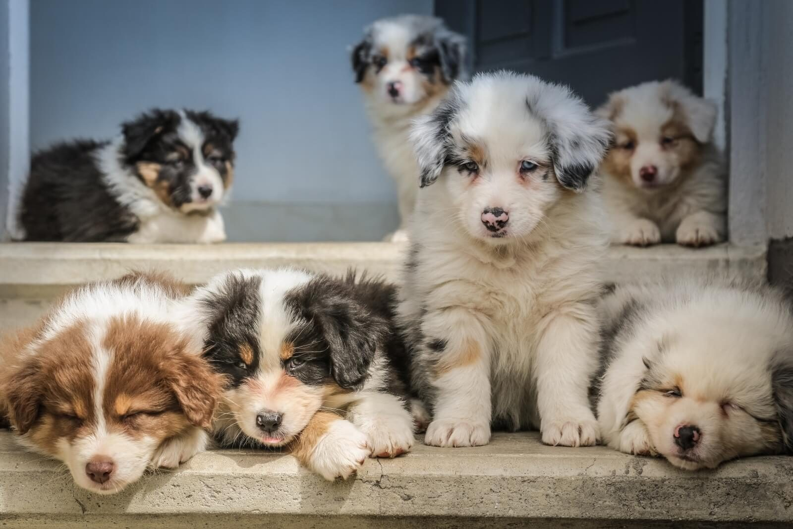 Puppy dogs sitting on steps